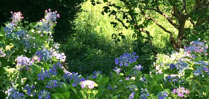 ひみつの花園